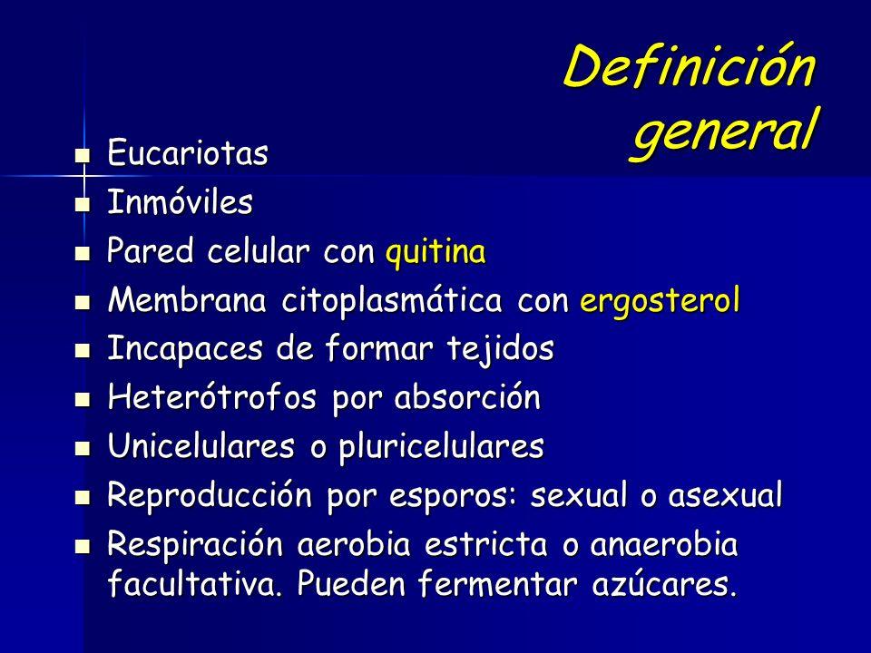 Definición general Eucariotas Eucariotas Inmóviles Inmóviles Pared celular con quitina Pared celular con quitina Membrana citoplasmática con ergosterol Membrana citoplasmática con ergosterol Incapaces de formar tejidos Incapaces de formar tejidos Heterótrofos por absorción Heterótrofos por absorción Unicelulares o pluricelulares Unicelulares o pluricelulares Reproducción por esporos: sexual o asexual Reproducción por esporos: sexual o asexual Respiración aerobia estricta o anaerobia facultativa.