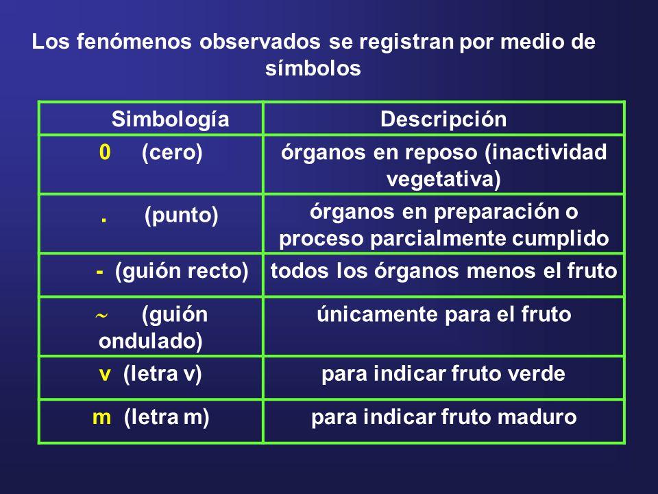 SimbologíaDescripción 0 (cero)órganos en reposo (inactividad vegetativa). (punto) órganos en preparación o proceso parcialmente cumplido - (guión rect