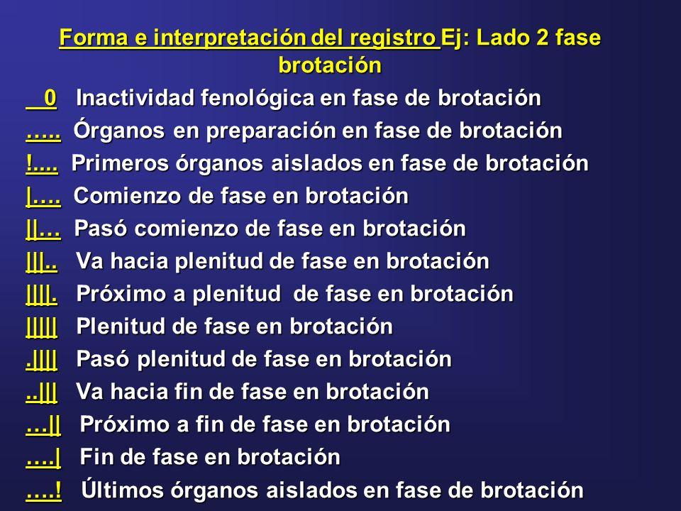 Forma e interpretación del registro Ej: Lado 2 fase brotación 0 Inactividad fenológica en fase de brotación 0 Inactividad fenológica en fase de brotac