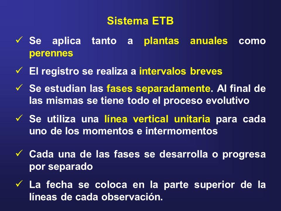 Sistema ETB Se aplica tanto a plantas anuales como perennes El registro se realiza a intervalos breves Se estudian las fases separadamente. Al final d