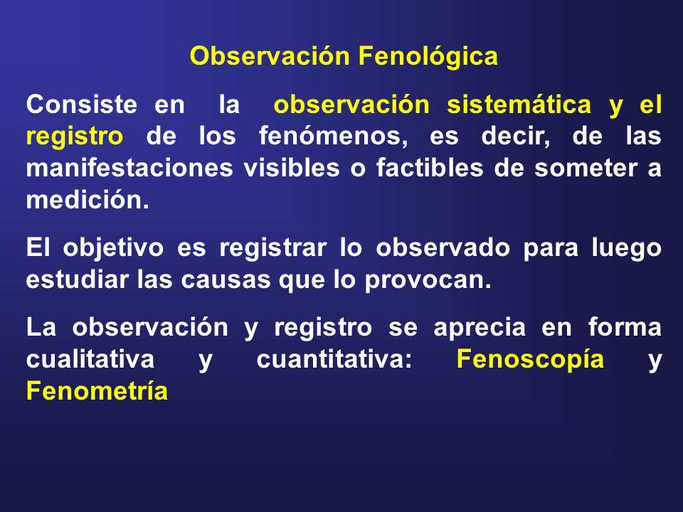 Observación Fenológica Consiste en la observación sistemática y el registro de los fenómenos, es decir, de las manifestaciones visibles o factibles de