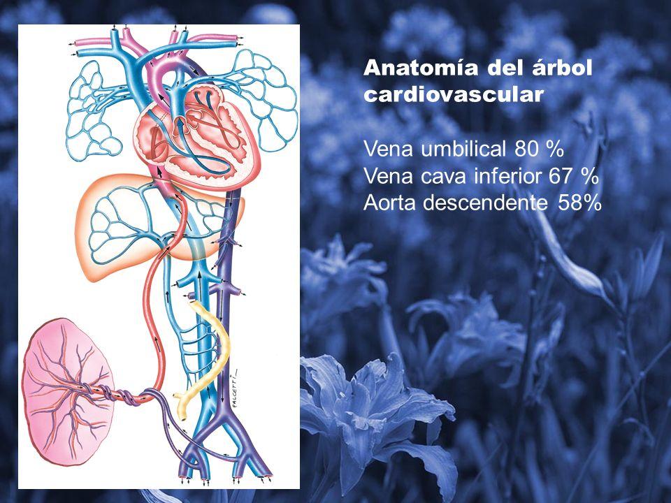 Comparado con el adulto pareciera que el feto está en insuficiencia cardíaca y sufriendo de hipoxia y acidosis.