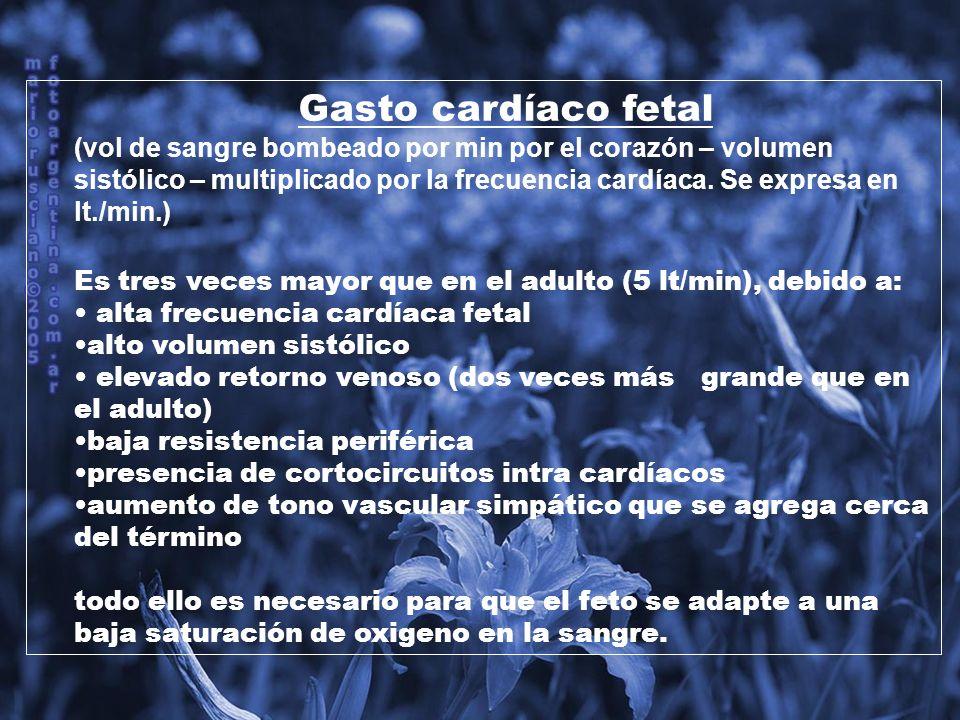 Frecuencia Cardíaca Fetal: Comienza latiendo a 65 lat/min.