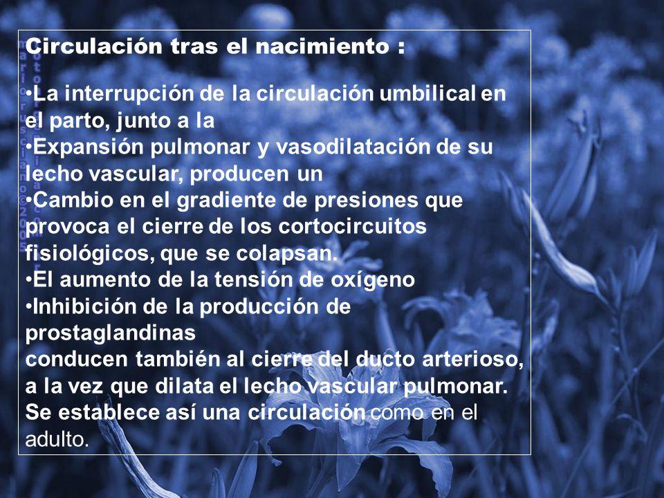 Modificaciones para la transicion feto – neonatal Ligadura de cordón Desaparece circulación placentaria Aumento de la resistencia vascular periférica Respiración Aumento de la PO2 alveolar Liberación de sustancias vasoactivas descenso de la resistencia vascular pulmonar Disminución del líquido pulmonar Antes del nacimiento, durante el trabajo de parto y después del nacimiento, la mayor parte es reabsorbido por la circulación capilar Ductus arterioso Flujo bidireccional o de izq a dcha Cierre funcional 10 – 18 hs Cierre completo 10 – 12 días Definitivo al tercer mes Foramen oval Cierre mecánico por cambio de presiones en aurículas Reversible Cierre definitivo es lento recién al año Conducto venoso de Arancio Cierre entre el 1er y 7º dia