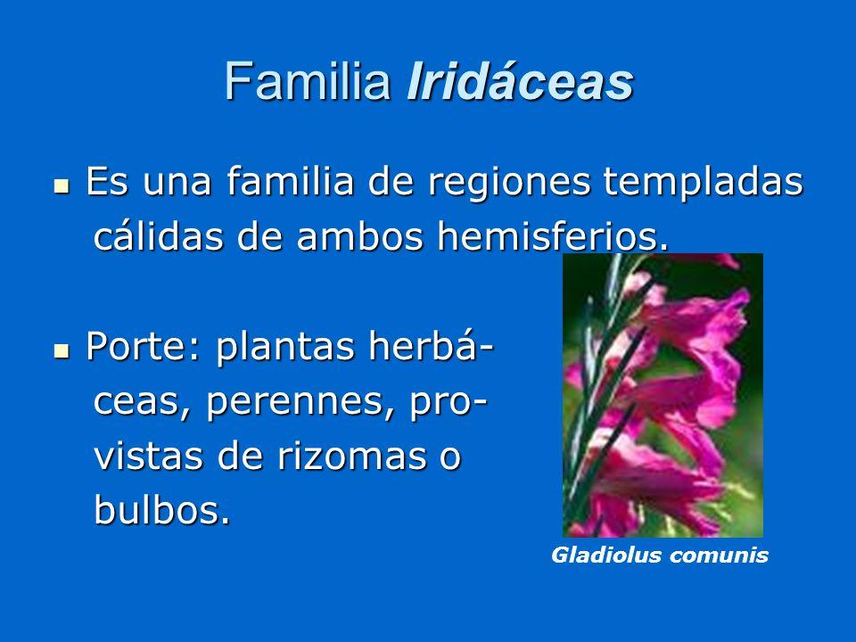 Familia Iridáceas Es una familia de regiones templadas Es una familia de regiones templadas cálidas de ambos hemisferios. cálidas de ambos hemisferios