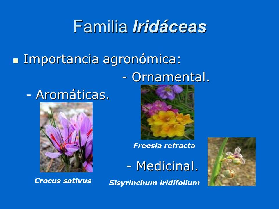 Familia Iridáceas Importancia agronómica: Importancia agronómica: - Ornamental. - Ornamental. - Aromáticas. - Aromáticas. - Medicinal. - Medicinal. Cr