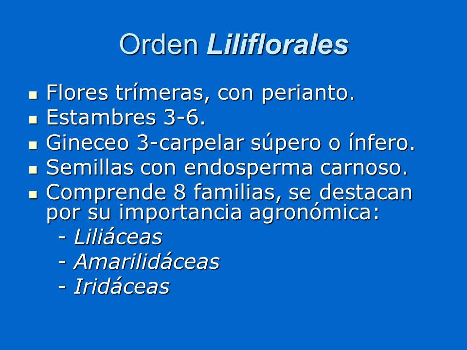 Orden Liliflorales Flores trímeras, con perianto. Flores trímeras, con perianto. Estambres 3-6. Estambres 3-6. Gineceo 3-carpelar súpero o ínfero. Gin