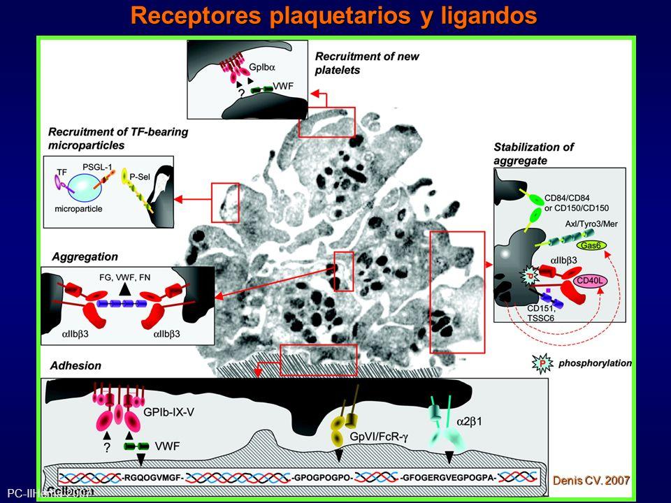 TROMBOASTENIA DE GLANZMANN Laboratorio: Cambio de forma presente Agregación plaquetaria ausente Agregación presente con agonistas fuertes (trombina) Reacción de liberación presente Contenido de Fg intraplaquetario disminuido o ausente Anormal retracción del coágulo PC-IIHema-2007