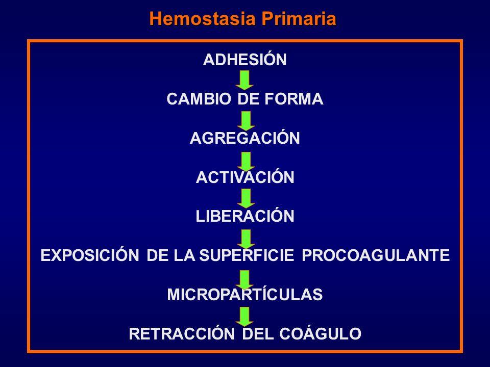 ADHESIÓN CAMBIO DE FORMA AGREGACIÓN ACTIVACIÓN LIBERACIÓN EXPOSICIÓN DE LA SUPERFICIE PROCOAGULANTE MICROPARTÍCULAS RETRACCIÓN DEL COÁGULO Hemostasia