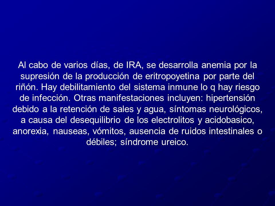Al cabo de varios días, de IRA, se desarrolla anemia por la supresión de la producción de eritropoyetina por parte del riñón. Hay debilitamiento del s