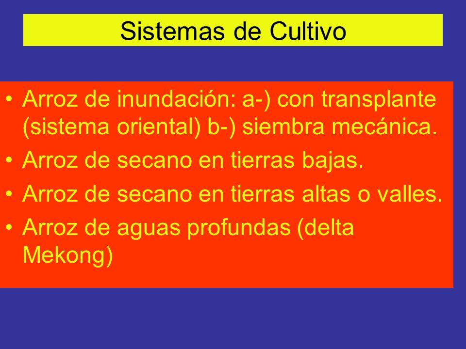 Sistemas de Cultivo Arroz de inundación: a-) con transplante (sistema oriental) b-) siembra mecánica. Arroz de secano en tierras bajas. Arroz de secan