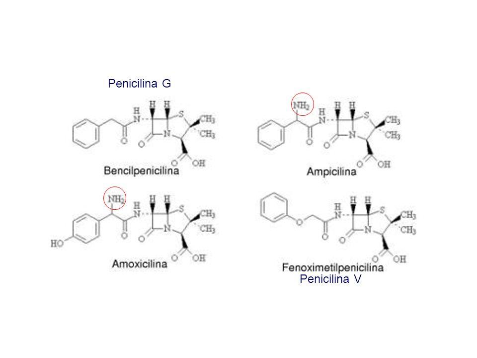 Penicilina G Penicilina V