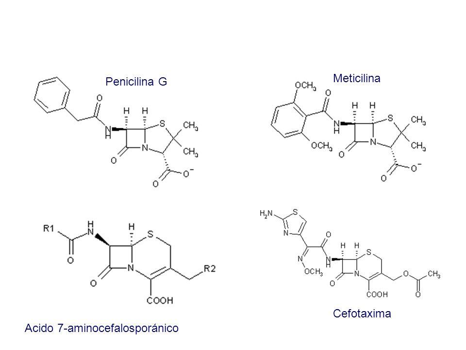 Acido 7-aminocefalosporánico Cefotaxima Penicilina G Meticilina