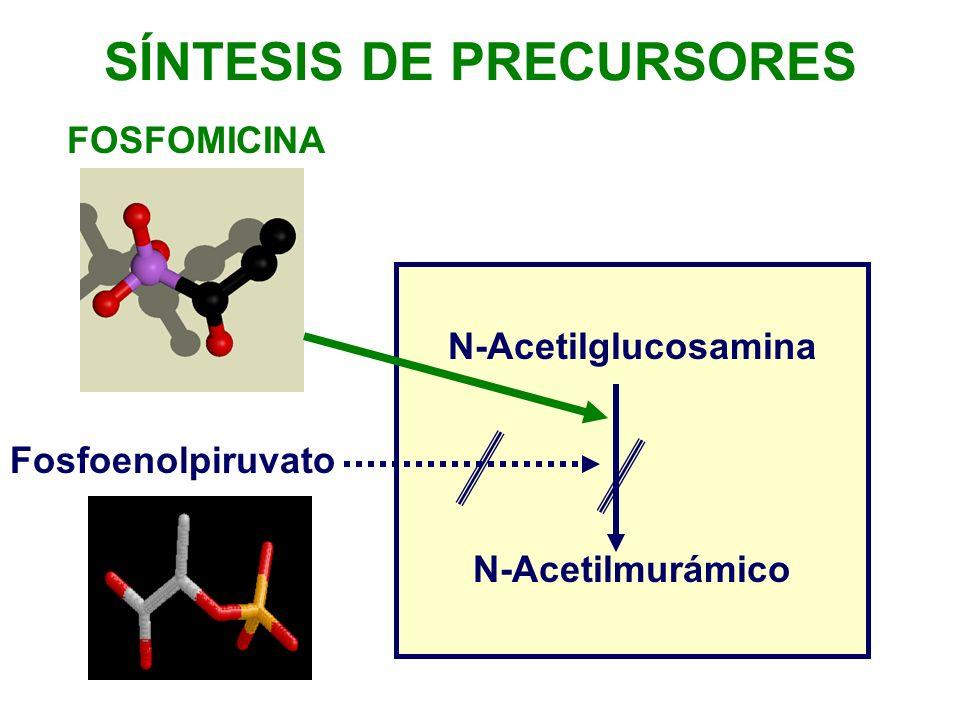 N-Acetilglucosamina N-Acetilmurámico Fosfoenolpiruvato SÍNTESIS DE PRECURSORES FOSFOMICINA