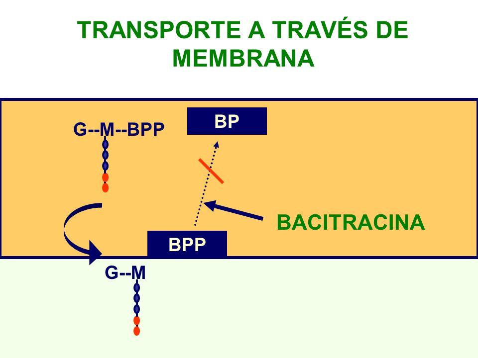 G--M--BPP G--M BPP BP TRANSPORTE A TRAVÉS DE MEMBRANA BACITRACINA