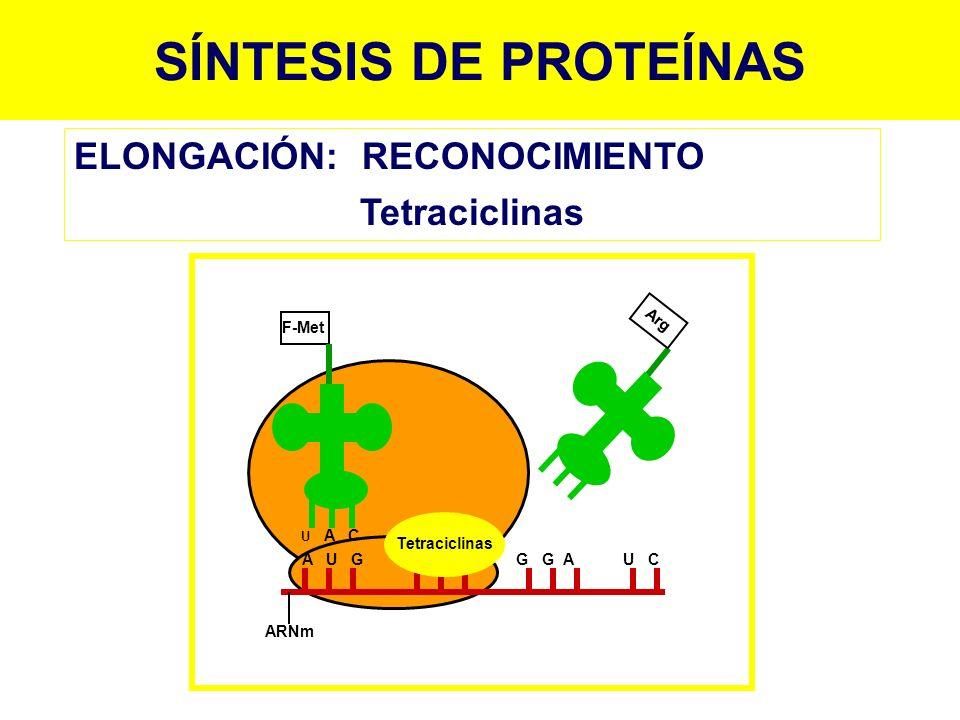 SÍNTESIS DE PROTEÍNAS F-Met ARNm A U G C G C G G A U C U A C Tetraciclinas Arg ELONGACIÓN:RECONOCIMIENTO Tetraciclinas