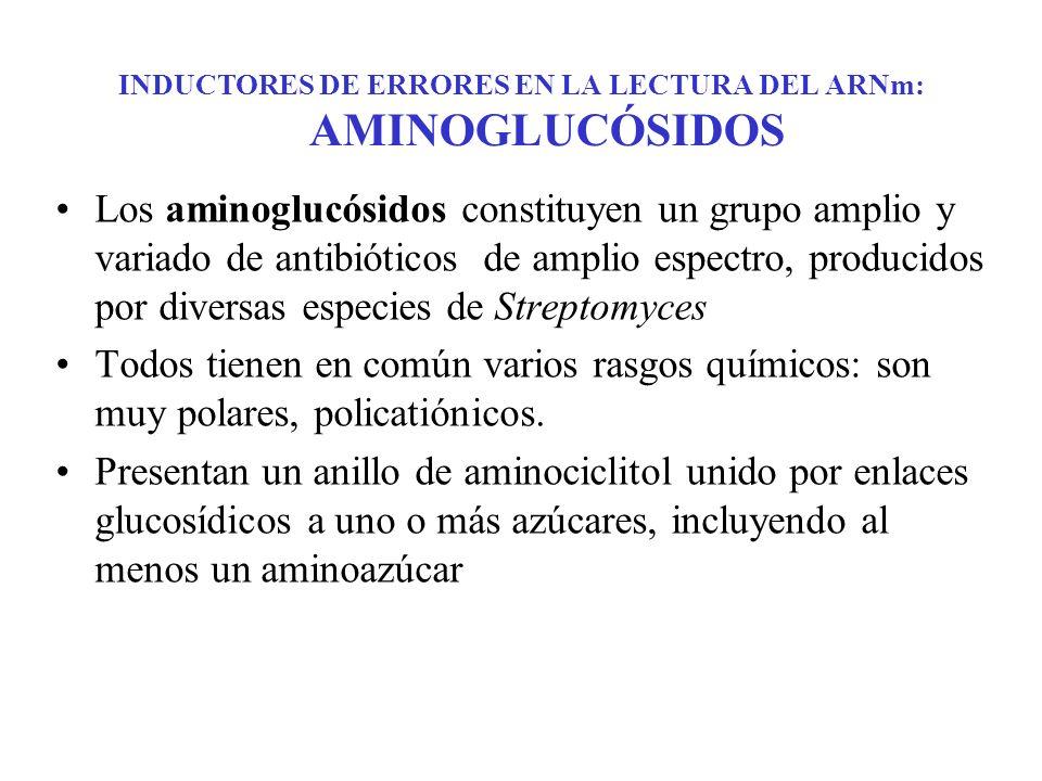 INDUCTORES DE ERRORES EN LA LECTURA DEL ARNm: AMINOGLUCÓSIDOS Los aminoglucósidos constituyen un grupo amplio y variado de antibióticos de amplio espe