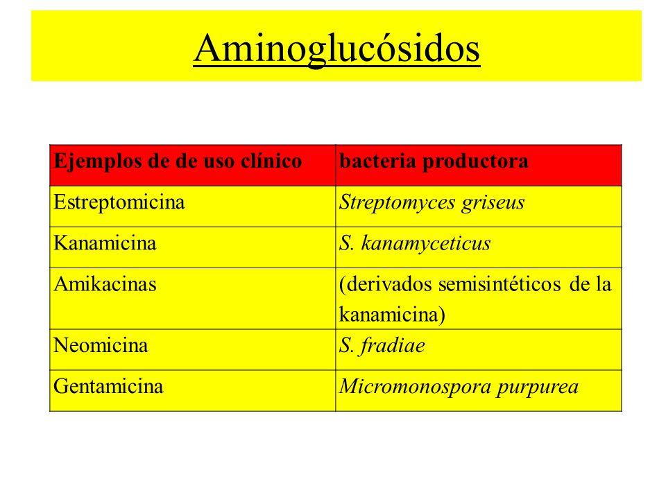 Ejemplos de de uso clínicobacteria productora EstreptomicinaStreptomyces griseus KanamicinaS. kanamyceticus Amikacinas (derivados semisintéticos de la