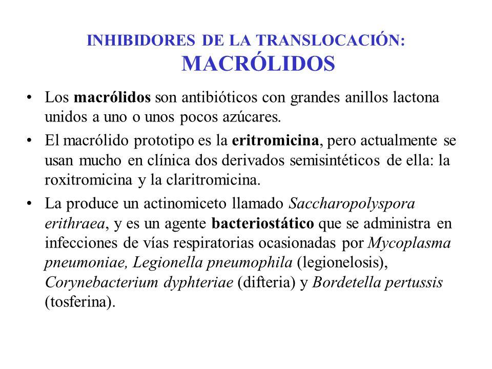 INHIBIDORES DE LA TRANSLOCACIÓN: MACRÓLIDOS Los macrólidos son antibióticos con grandes anillos lactona unidos a uno o unos pocos azúcares. El macróli