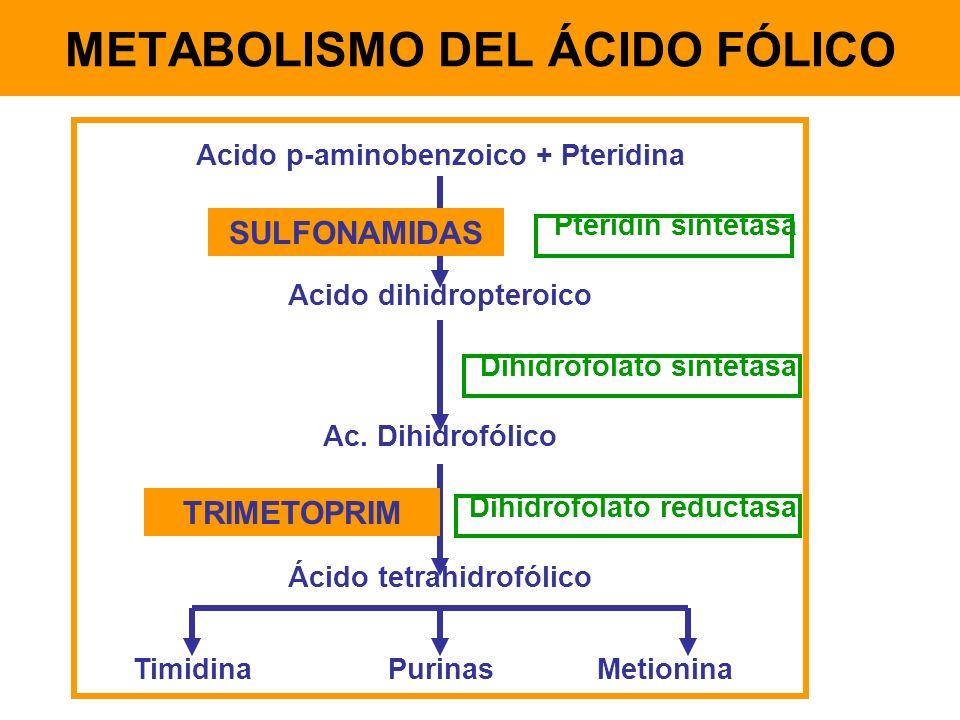 Acido p-aminobenzoico + Pteridina Pteridin sintetasa Acido dihidropteroico Dihidrofolato sintetasa Ac. Dihidrofólico Dihidrofolato reductasa Ácido tet