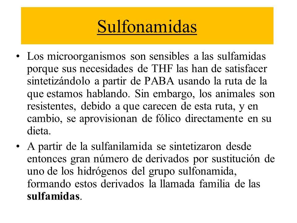 Sulfonamidas Los microorganismos son sensibles a las sulfamidas porque sus necesidades de THF las han de satisfacer sintetizándolo a partir de PABA us