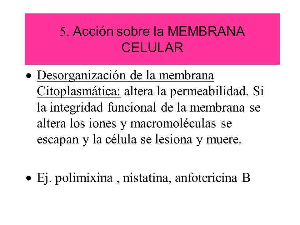 5. Acción sobre la MEMBRANA CELULAR Desorganización de la membrana Citoplasmática: altera la permeabilidad. Si la integridad funcional de la membrana