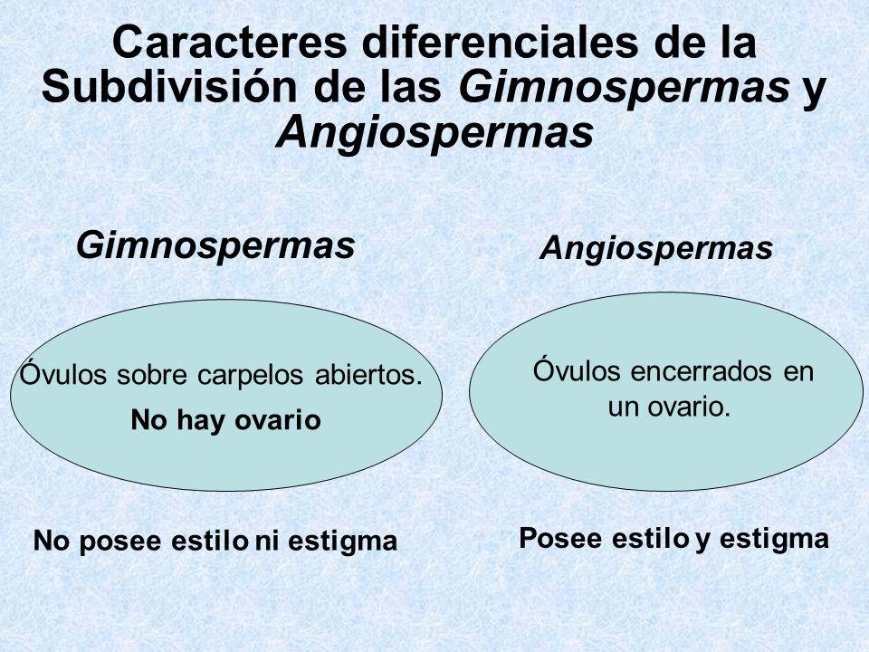 Caracteres diferenciales de la Subdivisión de las Gimnospermas y Angiospermas Gimnospermas Angiospermas Óvulos sobre carpelos abiertos. No hay ovario