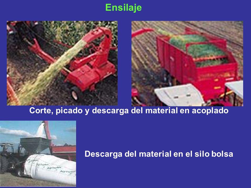 Ensilaje Corte, picado y descarga del material en acoplado Descarga del material en el silo bolsa