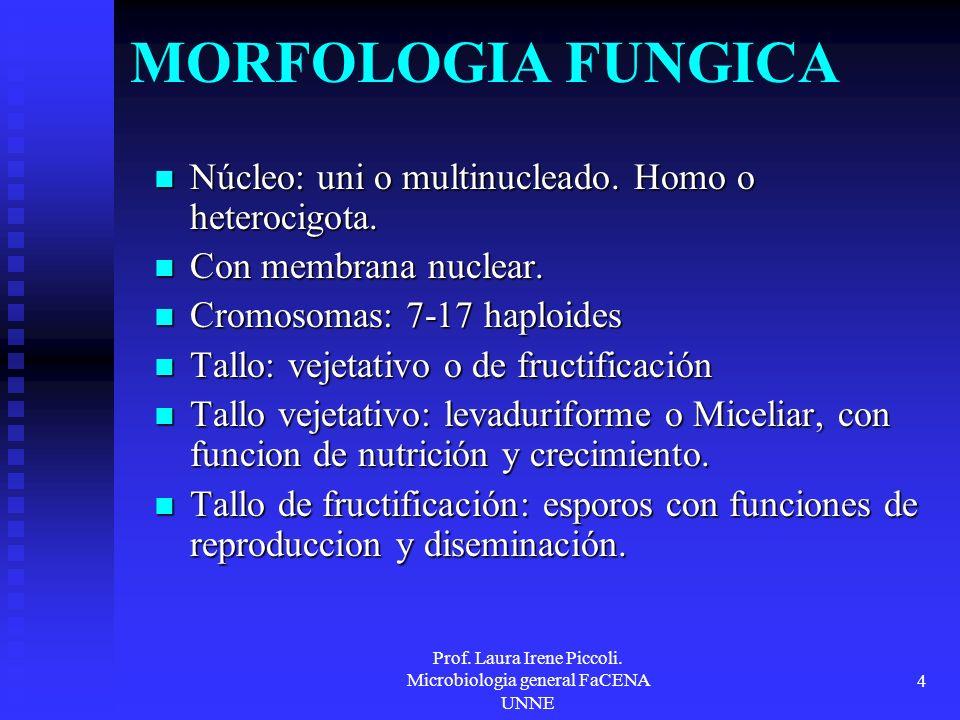 Prof. Laura Irene Piccoli. Microbiologia general FaCENA UNNE 4 MORFOLOGIA FUNGICA Núcleo: uni o multinucleado. Homo o heterocigota. Núcleo: uni o mult