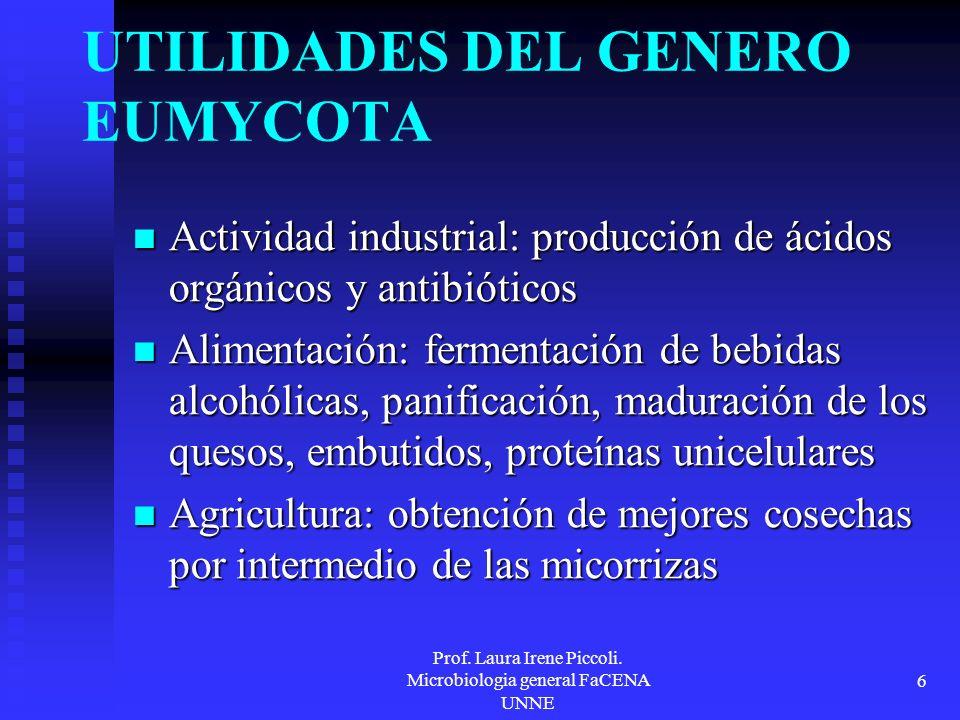 Prof. Laura Irene Piccoli. Microbiologia general FaCENA UNNE 6 UTILIDADES DEL GENERO EUMYCOTA Actividad industrial: producción de ácidos orgánicos y a