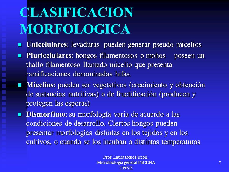 Prof. Laura Irene Piccoli. Microbiologia general FaCENA UNNE 7 CLASIFICACION MORFOLOGICA Unicelulares: levaduras pueden generar pseudo micelios Unicel