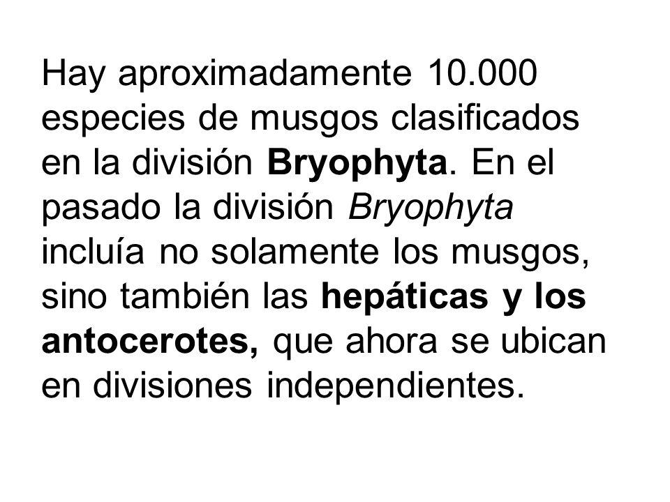 Hay aproximadamente 10.000 especies de musgos clasificados en la división Bryophyta. En el pasado la división Bryophyta incluía no solamente los musgo