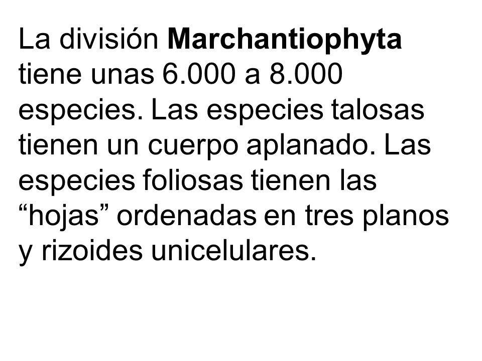 La división Marchantiophyta tiene unas 6.000 a 8.000 especies. Las especies talosas tienen un cuerpo aplanado. Las especies foliosas tienen las hojas