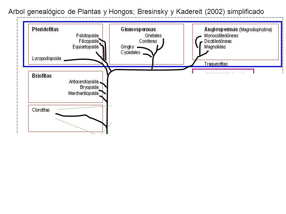 Arbol genealógico de Plantas y Hongos; Bresinsky y Kadereit (2002) simplificado Procariontes Mitocondria Cloroplasto Eucariontes Biología Vegetal 2007