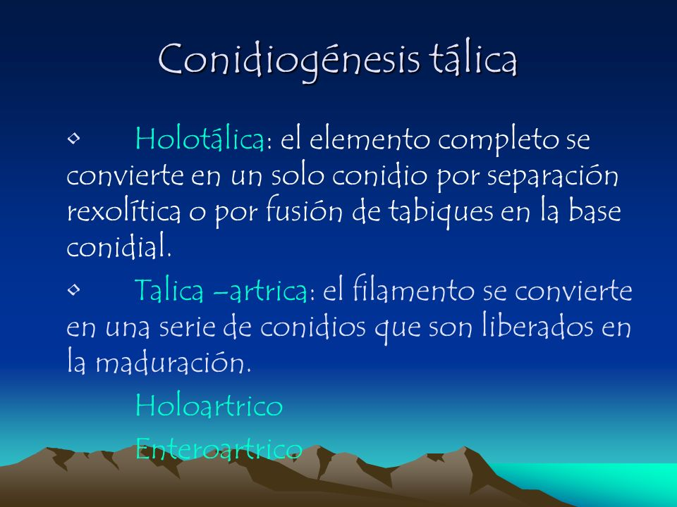 Conidiogénesis tálica Holotálica: el elemento completo se convierte en un solo conidio por separación rexolítica o por fusión de tabiques en la base c