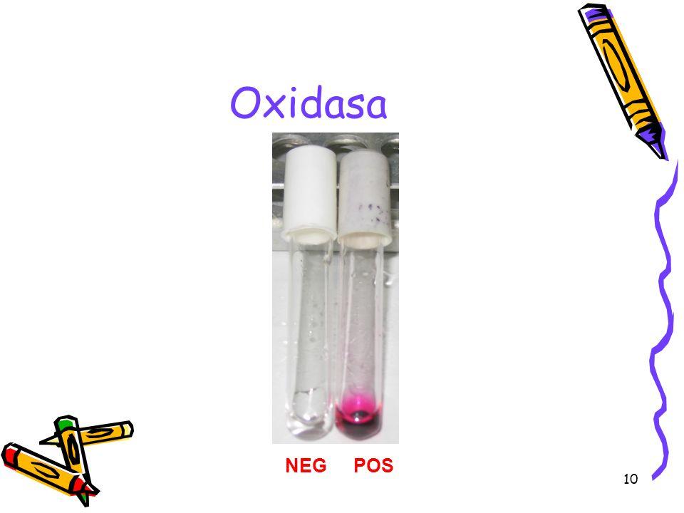 10 Oxidasa NEGPOS