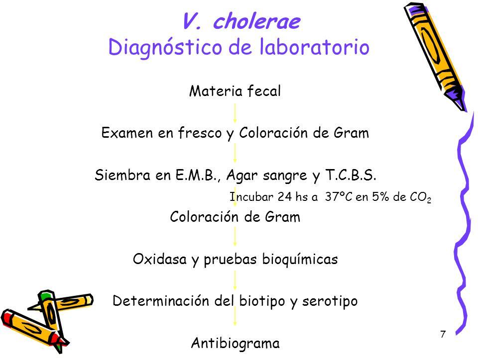 7 V. cholerae Diagnóstico de laboratorio Materia fecal Examen en fresco y Coloración de Gram Siembra en E.M.B., Agar sangre y T.C.B.S. Incubar 24 hs a