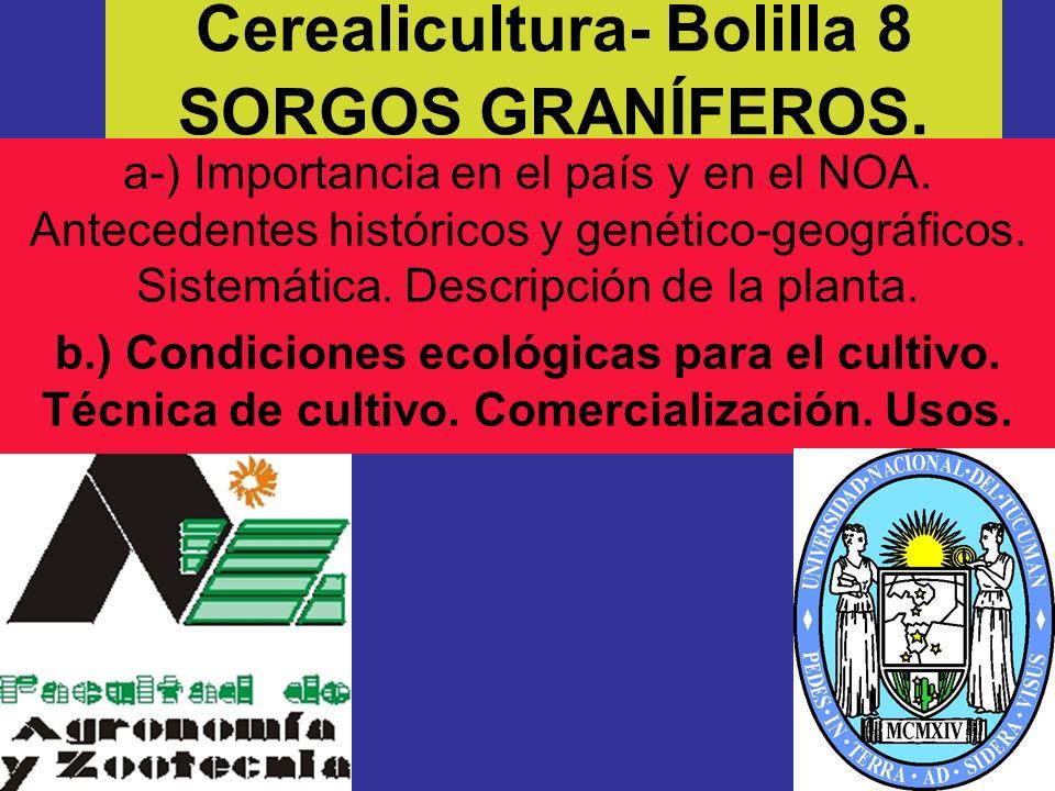 Cerealicultura- Bolilla 8 SORGOS GRANÍFEROS. a-) Importancia en el país y en el NOA. Antecedentes históricos y genético-geográficos. Sistemática. Desc