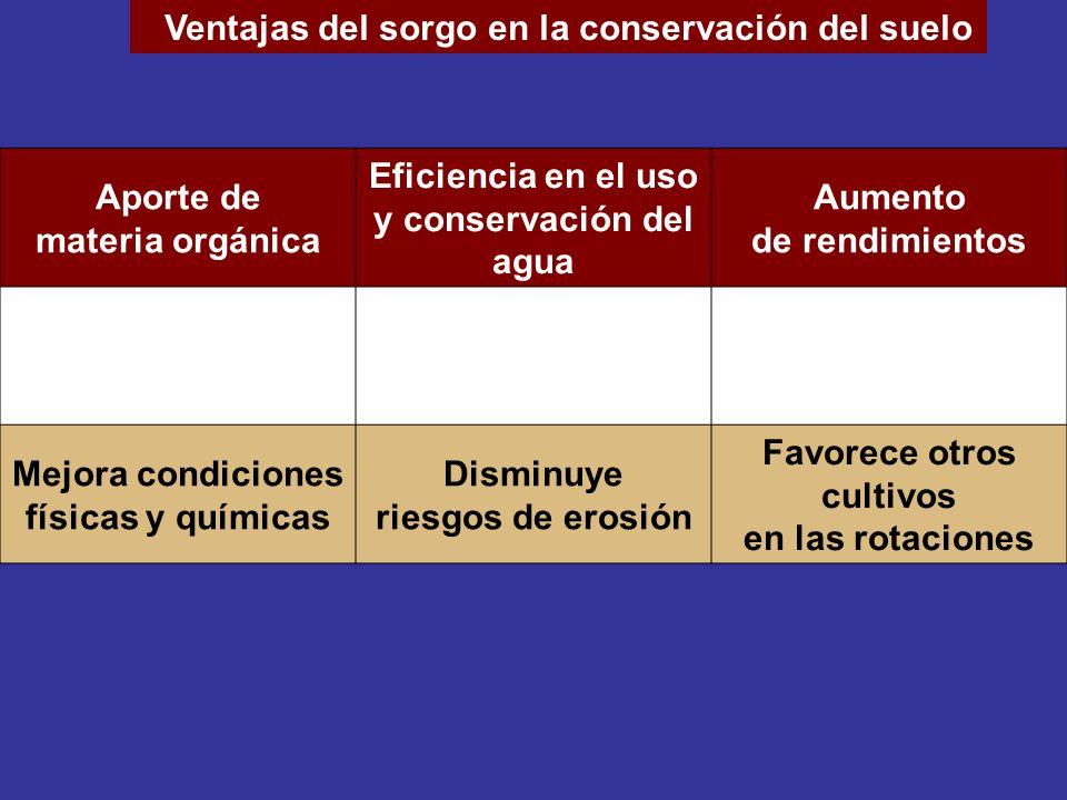 Ventajas del sorgo en la conservación del suelo Aporte de materia orgánica Eficiencia en el uso y conservación del agua Aumento de rendimientos Mejora