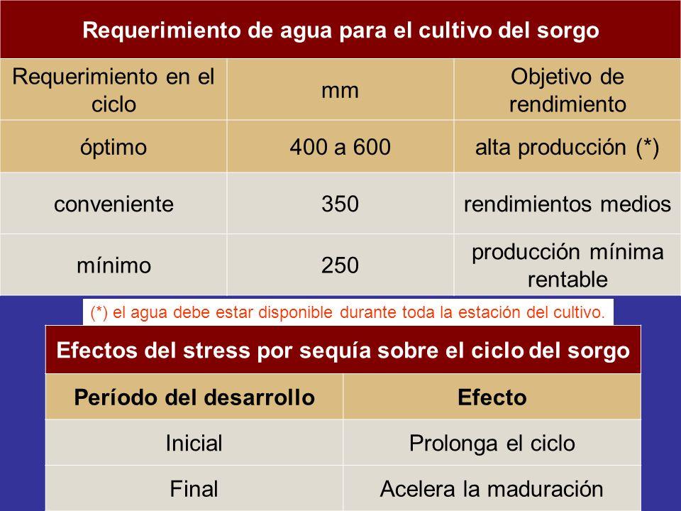 Requerimiento de agua para el cultivo del sorgo Requerimiento en el ciclo mm Objetivo de rendimiento óptimo400 a 600alta producción (*) conveniente350