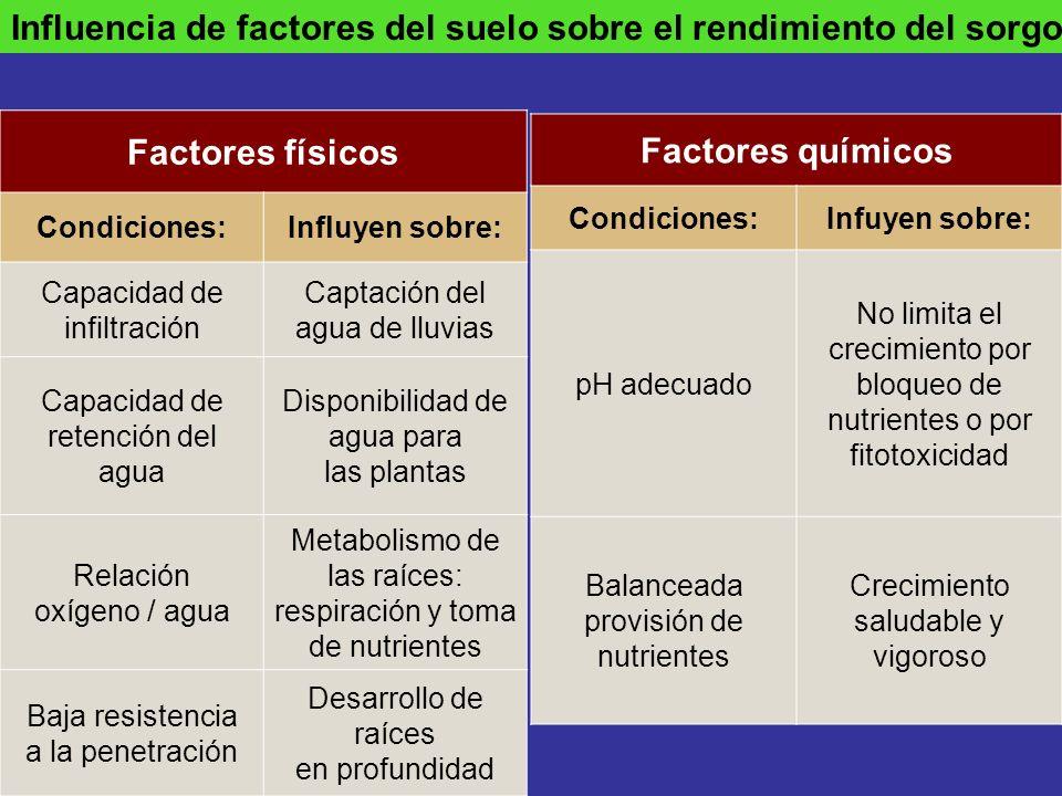 Influencia de factores del suelo sobre el rendimiento del sorgo Factores físicos Condiciones:Influyen sobre: Capacidad de infiltración Captación del a