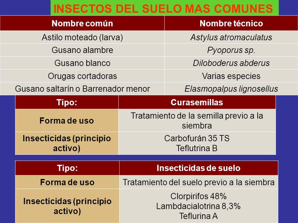 INSECTOS DEL SUELO MAS COMUNES Nombre comúnNombre técnico Astilo moteado (larva)Astylus atromaculatus Gusano alambrePyoporus sp. Gusano blancoDilobode