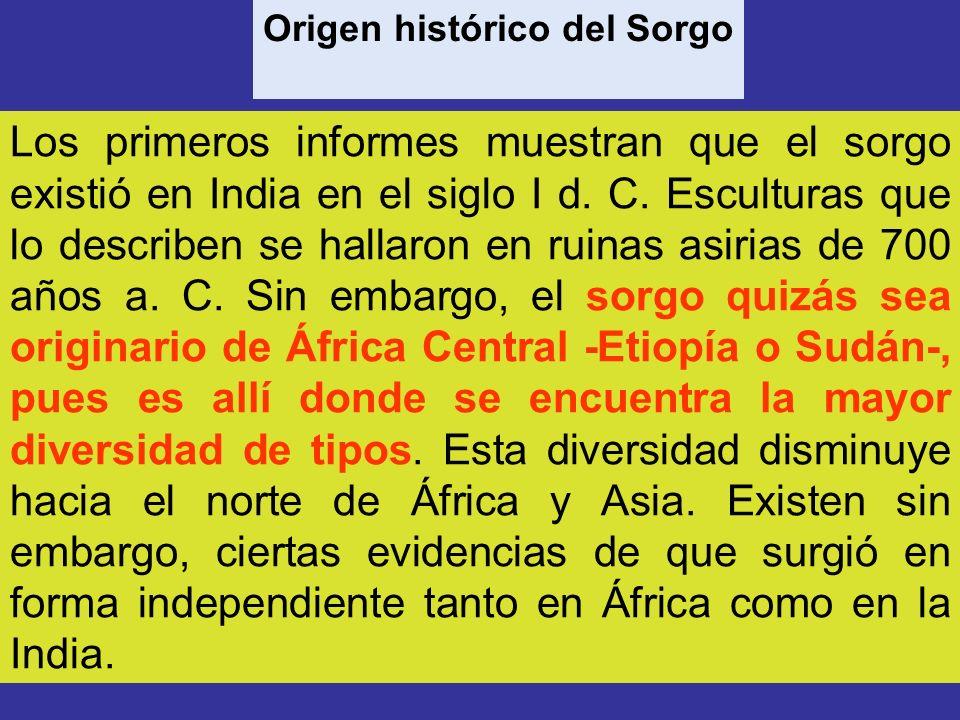 Origen histórico del Sorgo Los primeros informes muestran que el sorgo existió en India en el siglo I d. C. Esculturas que lo describen se hallaron en