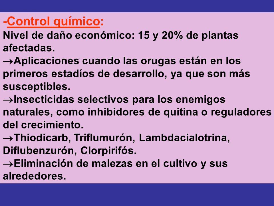 -Control químico: Nivel de daño económico: 15 y 20% de plantas afectadas. Aplicaciones cuando las orugas están en los primeros estadíos de desarrollo,