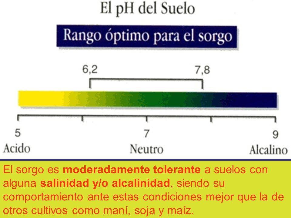 El sorgo es moderadamente tolerante a suelos con alguna salinidad y/o alcalinidad, siendo su comportamiento ante estas condiciones mejor que la de otr