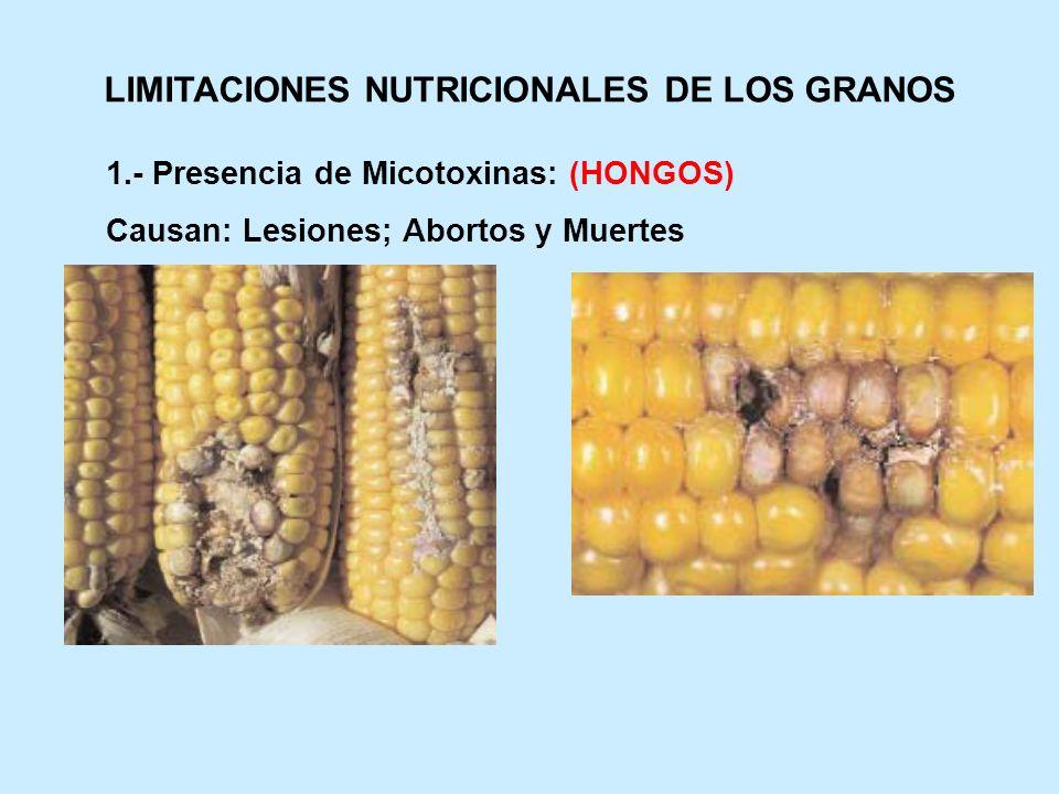 LIMITACIONES NUTRICIONALES DE LOS GRANOS 1.- Presencia de Micotoxinas: (HONGOS) Causan: Lesiones; Abortos y Muertes