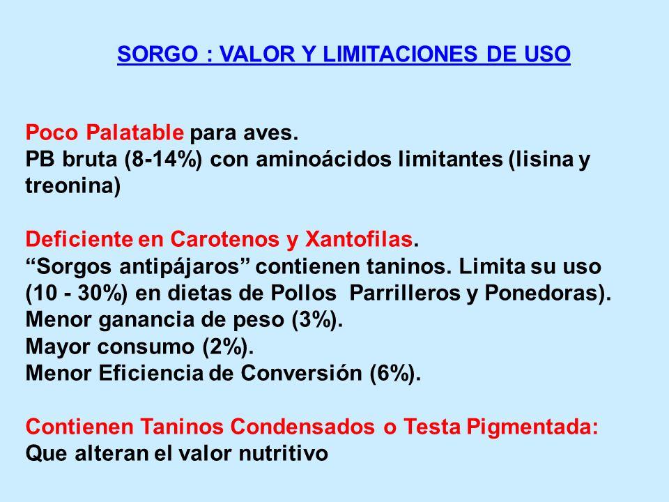 SORGO : VALOR Y LIMITACIONES DE USO Poco Palatable para aves. PB bruta (8-14%) con aminoácidos limitantes (lisina y treonina) Deficiente en Carotenos