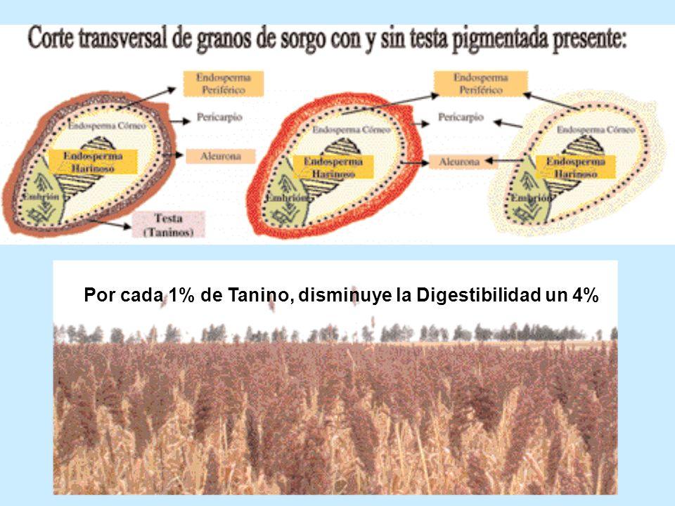 Por cada 1% de Tanino, disminuye la Digestibilidad un 4%