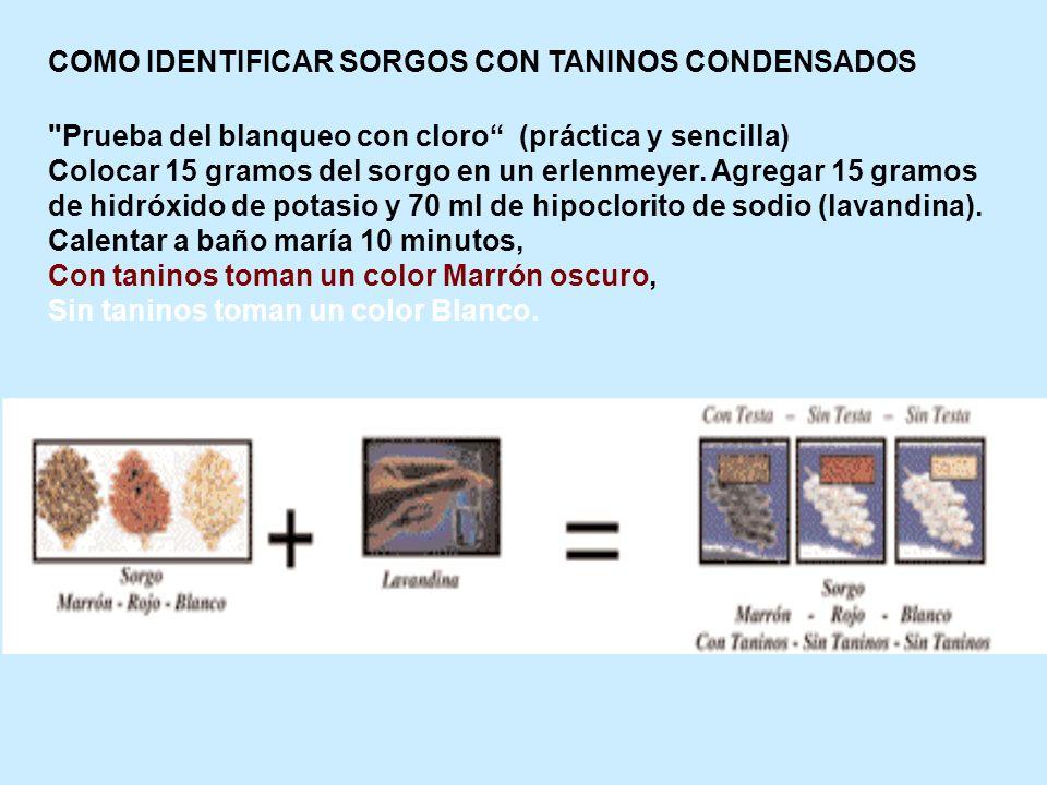 COMO IDENTIFICAR SORGOS CON TANINOS CONDENSADOS