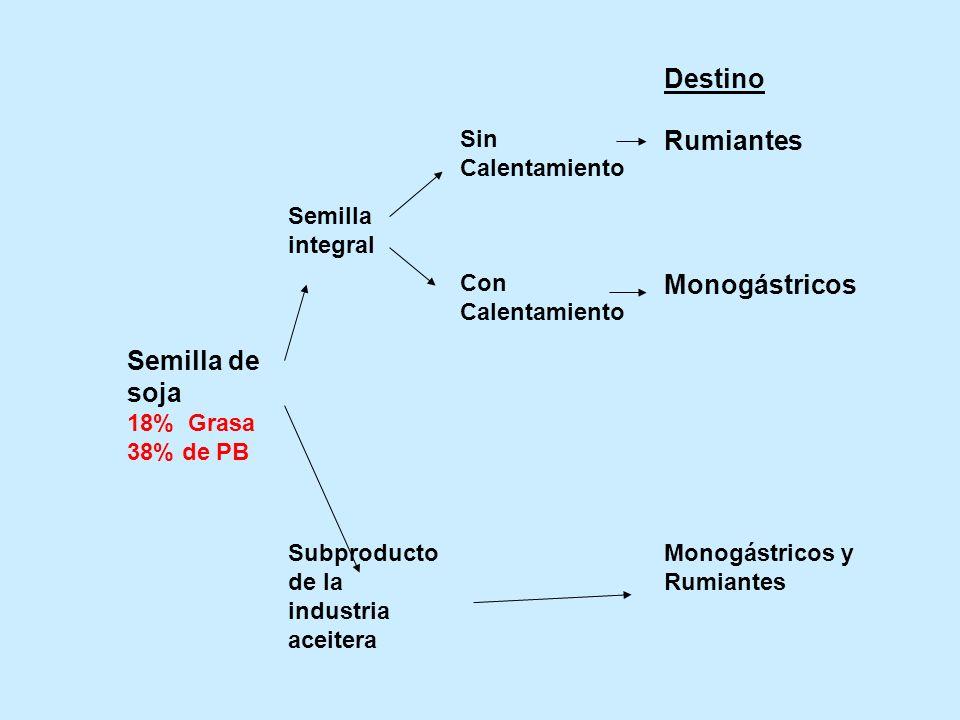 Destino Sin Calentamiento Rumiantes Semilla integral Con Calentamiento Monogástricos Semilla de soja 18% Grasa 38% de PB Subproducto de la industria a